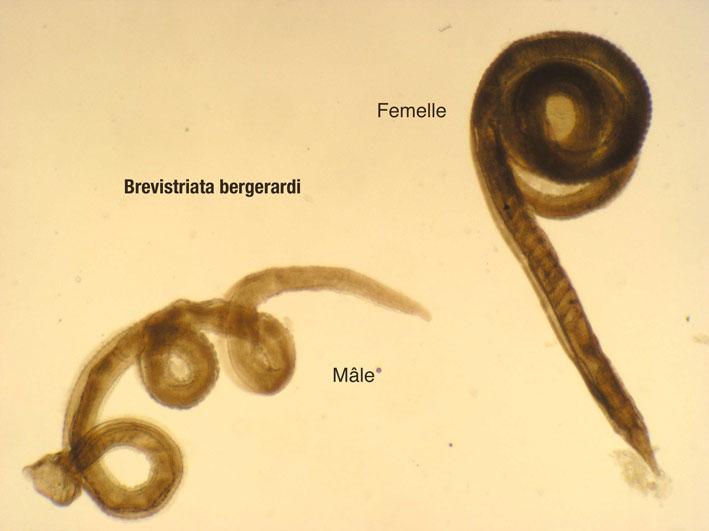 7 aliments naturels pour liminer les parasites for Eliminer les vers