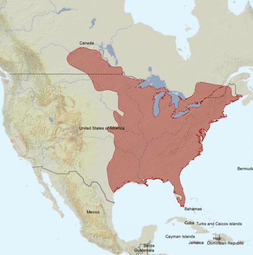 Carte de répartition : Écureuil gris