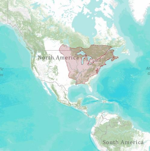 Carte de répartition : Tamia strié