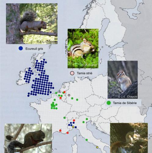 Carte de répartition : Sciuridés introduits