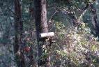 Tube à poils dans un arbre.