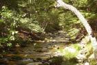 Forêt de feuillus, réserve de Lazovskiy, Russie