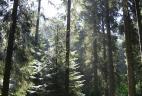Futaie irrégulière en Savoie