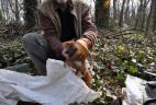 Manipulation d'un écureuil roux avec des gants.