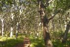 Chênaie, réserve de Lazovskiy, Russie