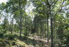 Forêt mixte traitée en taillis