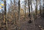 Forêt de feuillus près de Varèse