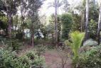 Habitat du Funambule à cinq raies claires en Guadeloupe