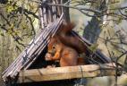 écureuil roux dans un mangeoir