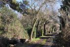 Bois de feuillus et conifères, Mas de Suffren (Istres)